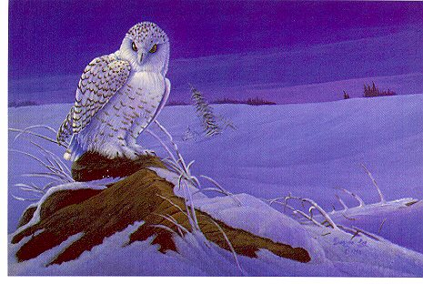 "Edge Of The Tundra By Wildlife Artist Dwayne Lee Print Size: 18"" x 24"" Price: $50.00"