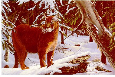 "On The Prowl, Print By Wildlife Artist Dwayne Lee Print Size: 17""x 22"" Price: $30.00"